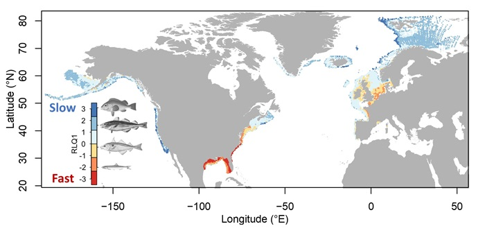 Illustration of marine fish traits follow fast-slow continuum across oceans