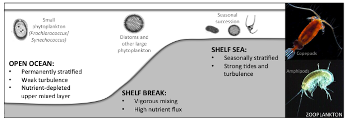 Diagram illustrating different physical regimes across a shelf break and examples of phytoplankton species that can be dominating in those environments during the summer.
