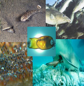 /-/media/Sites/OceanLife/projects/karinproject.ashx